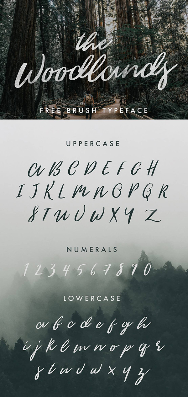 The Woodlands - Free Calligraphy Brush Script Font